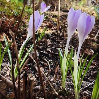 I found life in the garden 👩🌾 #spring