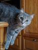 In the void (Stei&Helvi) Tags: cat chat animal de compagnie sony alpha félin feline wildlife faune macro eyes