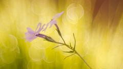...finally spring... ([-ChristiaN-]) Tags: spring bokeh flower summer frühling sommer sonne warm warmth wallpaper beyondbokeh