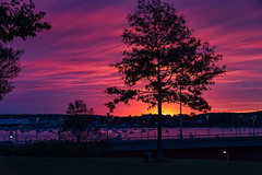 Portland Sunrise (Bob90901) Tags: portland sunrise harborviewmemorialpark maine clouds autumn longexposure tree light color rpg90901 silhouette dawn canon 6d canonef70200mmf28lisiiusm canon70200f28lll filter neutraldensity lee bigstopper nd10 nd 2016 september 0623