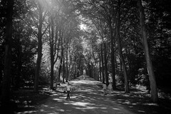 Don't forget the little things (gambajo) Tags: 1year1town1lens brühl blackandwhite blackwhite black white project outdoors public people street streetphotography park trees nature light shadows walk schlosspark augustusburg x100s fujix100s fujifilmx100s menschen