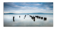 Not The Usual Suspects (RonnieLMills 5 Million Views. Thank You All :)) Tags: rotten wooden jetty posts kinnegar holywood county down belfast lough high tide