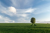 Lone Tree revisted (Mark MacFeeters) Tags: green blue lonetree clouds