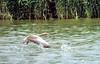 Oh devant, fait attention ! (jean-daniel david) Tags: oiseau oiseaudeau oie oiecendrée nature réservenaturelle lac lacdeneuchâtel yverdonlesbains suisse suisseromande vaud roseau eau reflet envol