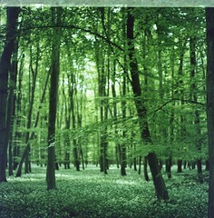 Fresh greens (Alice_argentique) Tags: filmisnotdead filmisalive filmcamera hasselblad hasselblad503cx kodak portra160 expiredfilm forest green woods