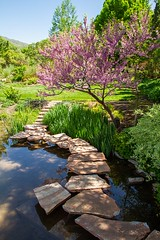 Red Butte Garden (Karen_Chappell) Tags: spring tree garden nature landscape scenery scenic botanicalgarden utah travel usa green pink blossoms water pond saltlakecity path stones