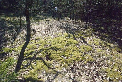 Волинський ліс Мох InterNetri Ukraine 0874648536