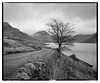 WastWater_RB67_HP5_01 (D_M_J) Tags: wast water wastwater lake district lakedistrict lakeland cumbria north west uk england wasdale landscape film camera medium format 6x7 roll 120 mamiya rb67 pro sd ilford hp5 plus 400 kodak hc110 epson v850 vuescan black white bw blackandwhite mono monochrome tree