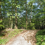 Sunlit forest trail in spring thumbnail