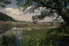 """Moor """"Mürmes"""" near Schalkenmehren, Eifel (Netsrak) Tags: dunst eifel europa europe landschaft maar natur schalkenmehren haze landscape nature"""