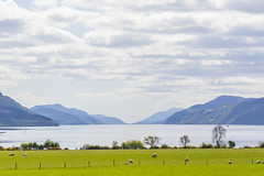 Loch Ness (Mantock Productions) Tags: loch ness highlands scotland inverness dores landscape summer may sheep uk