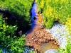 Rauarikas vesi (Veeseire) Tags: veeseireee veeblogi veeseire veeblog veeveeb kraav vesi loodusblogi