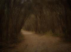 Teddy Bears Lane (Kevin Rheese) Tags: capeconran fairytale teddy teddybearspicinic woods forest