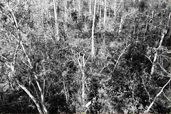 Everglades National Park, Florida (lotosleo) Tags: evergladesnationalpark florida fl nationalpark everglades swamp marsh nature plant spring landscape tree reflection blackandwhite эверглейдс флорида mangroveforest forest outdoor bwd