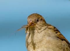 Natural Hunter. (Omygodtom) Tags: bug bird nature portrait wildlife nikon70300mmvrlens d7100 smugmug flickr facebook