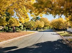 Kitchen street,Mansfield (Denis Fox) Tags: mansfield autumn golden leaves 2018