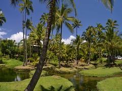 Richardson Beach, cerca de Hilo (Setol Loom) Tags: richardsonbeach hilo bigisland hawai hawaii hawái
