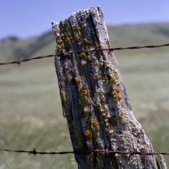Post (Scott Holcomb) Tags: postwithpzazz dairycountry westmarin california kowasix kowa12885mmlens kowal39•3cuvø67filter cinestill50dfilm mediumformat 6x6 120film epsonperfectionv600photo photoshopdigitalization