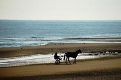 Playa Normandia (Francia) (JCMCalle) Tags: image photohoot fhotografy photofrapher nofilter naturaleza nature naturephotography nofilters jcmcalle normandia playa francia caballo carro