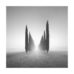 Poggio (Rohan Reilly Photography) Tags: tuscany toscana cypress fineart landscape ireland italy photography fog mist nebbia