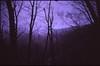 (✞bens▲n) Tags: minolta cle kodak e100vs rokkor 40mm f2 film analogue slide japan nagano woods mountains trees cold dark