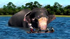 Swimming elephant with gunshot wounds (THE WILD ELEPHANT) Tags: huge elephant rescue video youtube quite baby funny kids videos the wild wildlife news tv