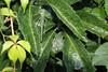 Katydid (BeerAndLoathing) Tags: summer 2017 katydid 77d august insects canon colorado usa