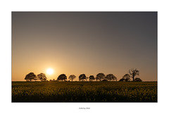 Don't worry, i'll fit (AnthonyCNeill) Tags: sunset evening landscape vista outdoor trees sun field composition color colour paisaje puestadelsol sonnenuntergang coucherdesoleil