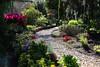 garden path (HansHolt) Tags: garden tuin path pad pebbles kiezels rhododendron fern spring voorjaar canon 6d canoneos6d canonef24105mmf4lisusm