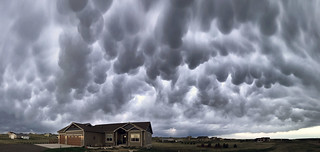 Mammatus without Thunderstorms