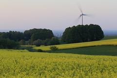 Möhnesee - Haarstrang (Michael.Kemper) Tags: canon eos 6d 6 d canoneos6d canonef70200f4lusm ef 70200 f4l f4 l usm deutschland germany nrw nordrheinwestfalen northrhinewestphalia westphalia möhnesee moehnesee möhne moehne see lake sauerland kreis soest gemeinde feld felder field fields raps rapsfeld rapsfelder rape gelb yellow mai may windrad windräder wind turbine turbines windmill windmills sonnenuntergang sunset haar haarstrang ridge theiningsen frühling spring canola