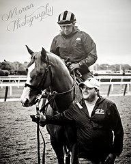 Chad Summers (EASY GOER) Tags: lensbaby lensbabyedge80 horseracing equine thoroughbred belmontpark