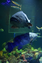 Wonders of Wildlfie National Museum and Aquarium (Adventurer Dustin Holmes) Tags: 2018 wondersofwildlife corral animalia chordata underwater aquarium saltwater sharktank animal animals water