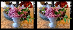Japanese Dwarf Lilac (sleightman 3D) Tags: allrightsreserved copyrightcarlwilson 3d 3dphotography crosseye crossview colorful flowers oof stereoview stereo stereoscopic stereogram sleightman stereoscope lilac japanese vase arrangement stilllife borders title pretty fragrant fresh