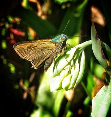 borboleta (jakza - Jaque Zattera) Tags: borboleta inseto