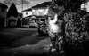 2018_137 (Chilanga Cement) Tags: fuji fujix100f fujifilm xseries x100f bw blackandwhite monochrome cat kitty whiskers paws wall road