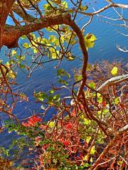 Tranquility by the lake VIII (elphweb) Tags: hdr highdynamicrange nsw australia tree trees forest bush woods wood lake lakeside