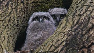 Owlet Funbundles