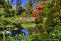 "The Japanese Garden (jimgspokane) Tags: japanesegarden spokanewashingtonstate gardens trees ""nikonflickraward"" today´sbest"