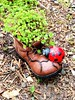 THIS LADYBUG LIVED IN A BOOT (Visual Images1 (Thanks for over 5 million views)) Tags: android ladybug boot colors discoverygarden