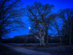 Christian 5's eg (ibjfoto) Tags: danmark denmark dyrehaven forest ibjensen ibjfoto natur sealand sjælland woodland skov trees træer
