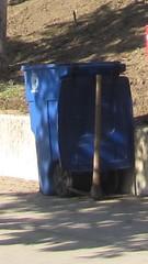 Conservation Corps of Long Beach CCLB blue recycling Toter EVR I (harrisons13) Tags: recyclelongbeach longbeachrecycles longbeachtrashcart cart trash raretrashcart rare rarewaste rotonics rotationalmolded roto trashcart trashcan longbeach toterevr evrii evri evr toter