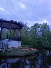 DSC00976 (HighBlueFlames) Tags: holland thenetherlands travel spring flowers tulips sonyrx100 delft keukenhof rotterdam