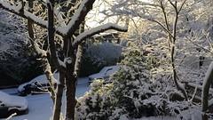 Vancouver 24 02 2018 (Pierre♪ à ♪VanCouver) Tags: yuki fuyu snow neige vancouver canada kanada