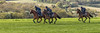 Come on number 3 (R22GMS) Tags: race horse horses thoroughbreds gallop gallops training