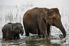 Just the two of us (www.jamesbrew.com) (James Brew (www.jamesbrew.com)) Tags: srilanka travel travelphotography travelling wildlife elephant elephants udawalawe nationalpark nature safari wildlifephotography