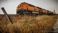 A Pack of Pumpkins (dscharen) Tags: ancona bnsf chillicothesub illinois trains transcon intermodal pumpkins bnsf4220