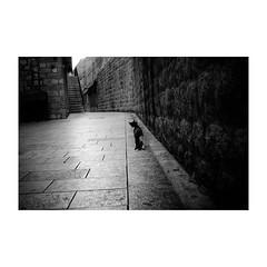 dubrovnik (s_inagaki) Tags: monochrome 猫 walking bnw 朝 壁 oldlens モノクロ 白黒 bw 散歩 vintagelens wall blackandwhite dubrovnik cat スナップ morning ドゥブロヴニク オールドレンズ クロアチア snap industar69