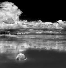 Voice to dreams (Robyn Hooz) Tags: indonesia shell conchiglia mare nuvole sea clouds riflesso reflection scars sogni dreams far holiday