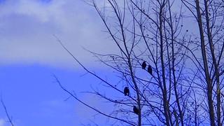 The Tree Gathering
